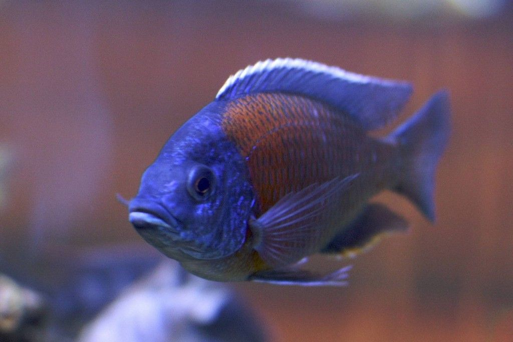 Best Fish for a 10-Gallon Tank Setup https://pethelpful.com/fish-aquariums/Best-Fish-for-10-Gallon-Tank