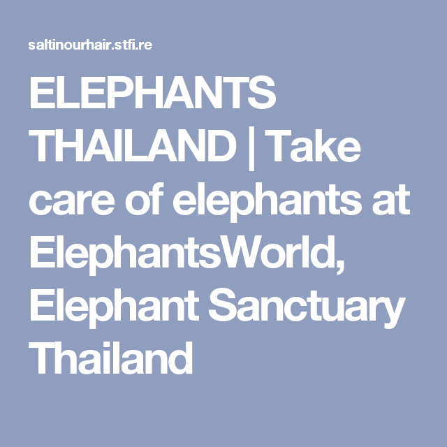 ELEPHANTS THAILAND   Take care of elephants at ElephantsWorld, Elephant Sanctuary Thailand