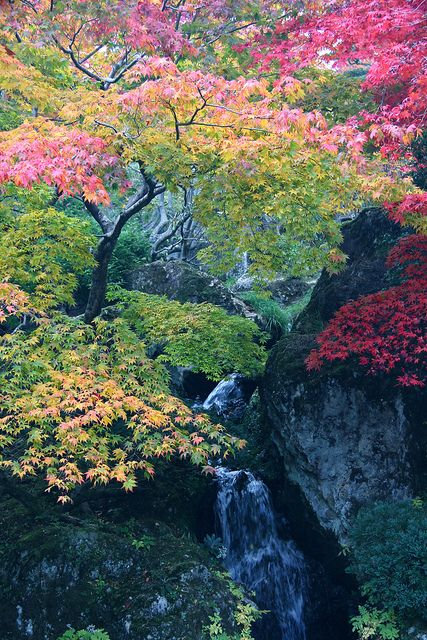 Autumn Leaves Of Hakone Museum Of Art Japan Nature Beautiful Landscapes Mother Nature