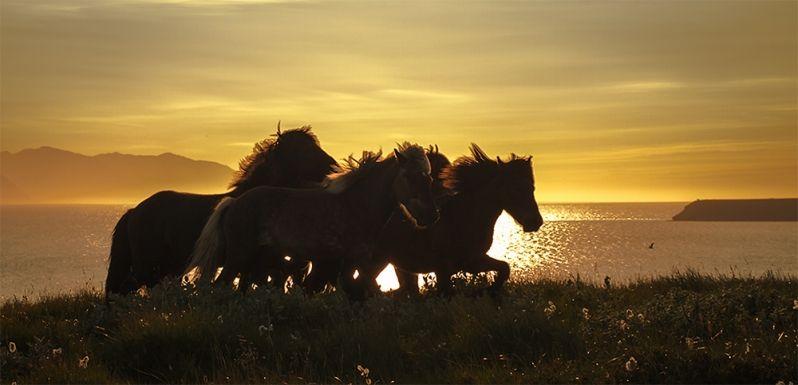 #elfoton14 #categoría #Fauna En el Concurso de Fotografía Elfoton.es tenemos 9 categorías para que todo el mundo encuentre la suya. #Instagram #sinfiltros Participa en http://elfoton.com Usuario: ardelas (Islandia) - Caballos islandeses - Tomada en Akureyri el 16/08/08