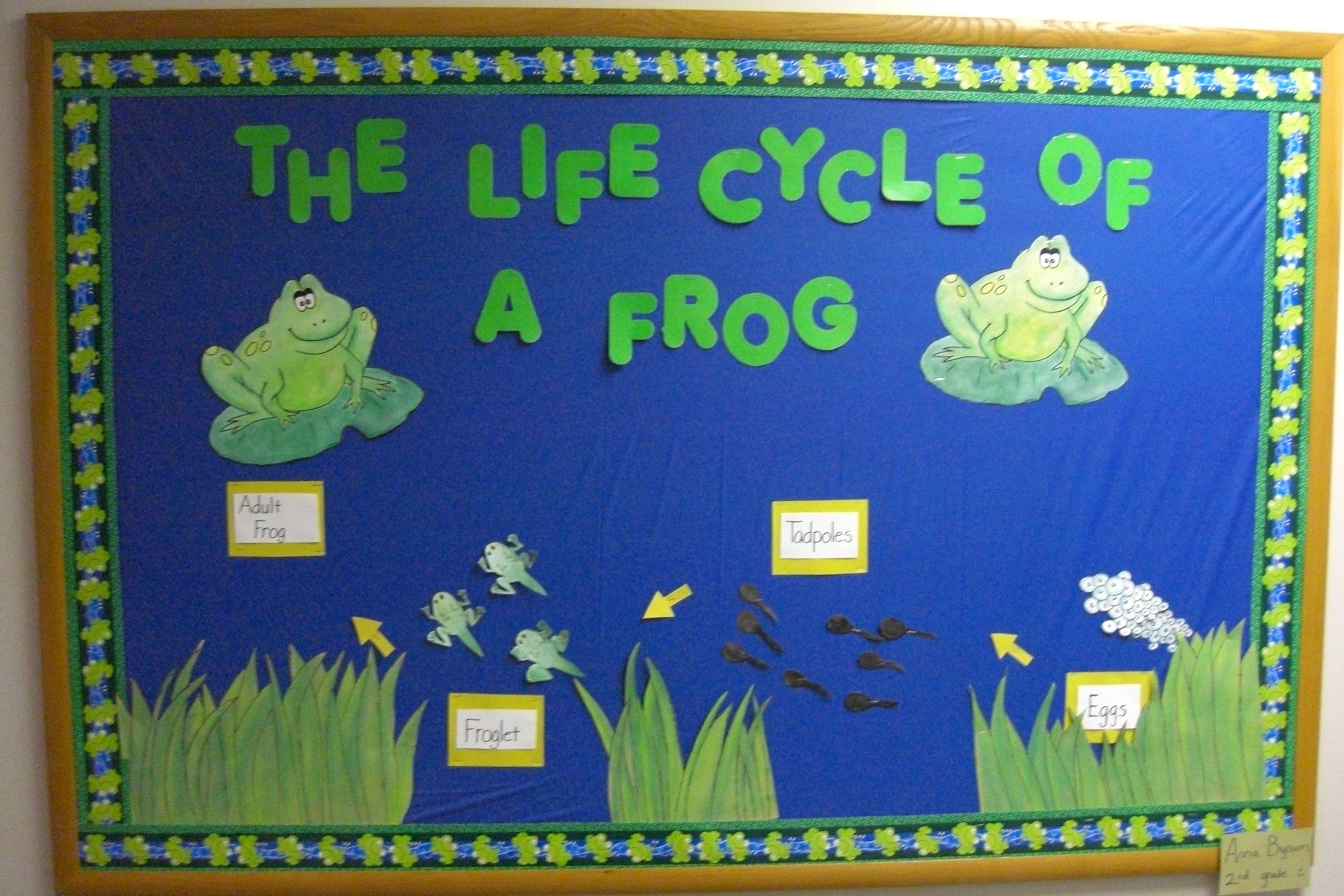 Frog Life Cycle And Facts Mnk Science Etc Science