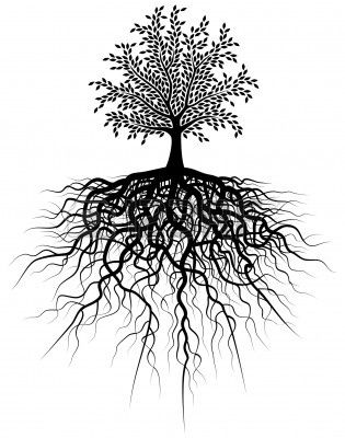 Editable Vector Illustration Of A Tree And Its Roots Roots Illustration Tree Roots Tree Illustration