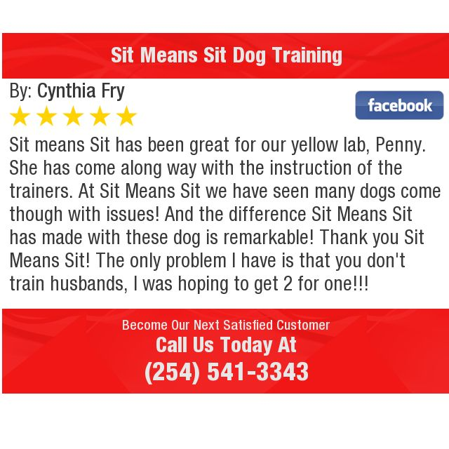 Sit Means Sit Has Been Great For Our Yellow Lab Penny She Has
