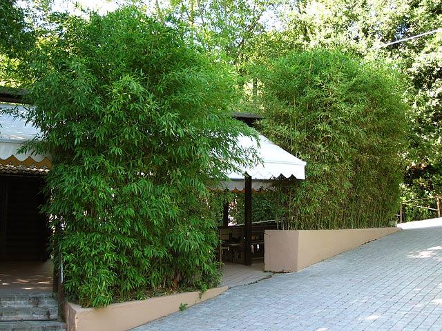 sichtschutzhecke bambus - google zoeken | voortuin | pinterest, Garten Ideen