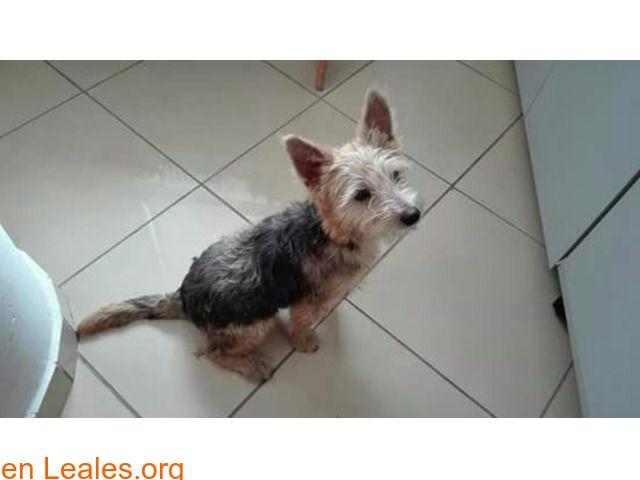 Perros Encontrados España Las Palmas Gran Canaria Pinterest