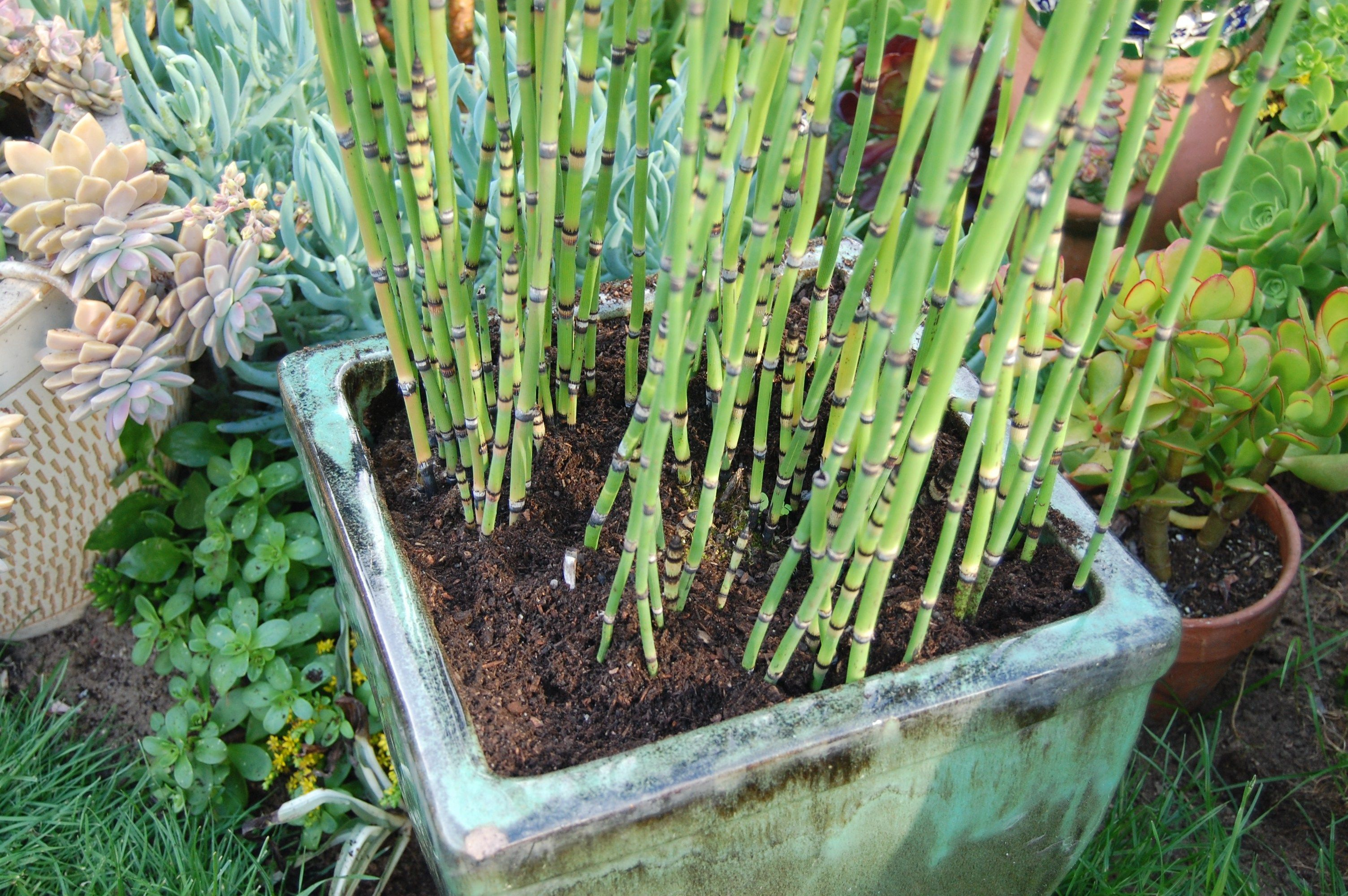 33271cea730409c52113f89b4605d303 - How To Get Rid Of Reeds In A Field
