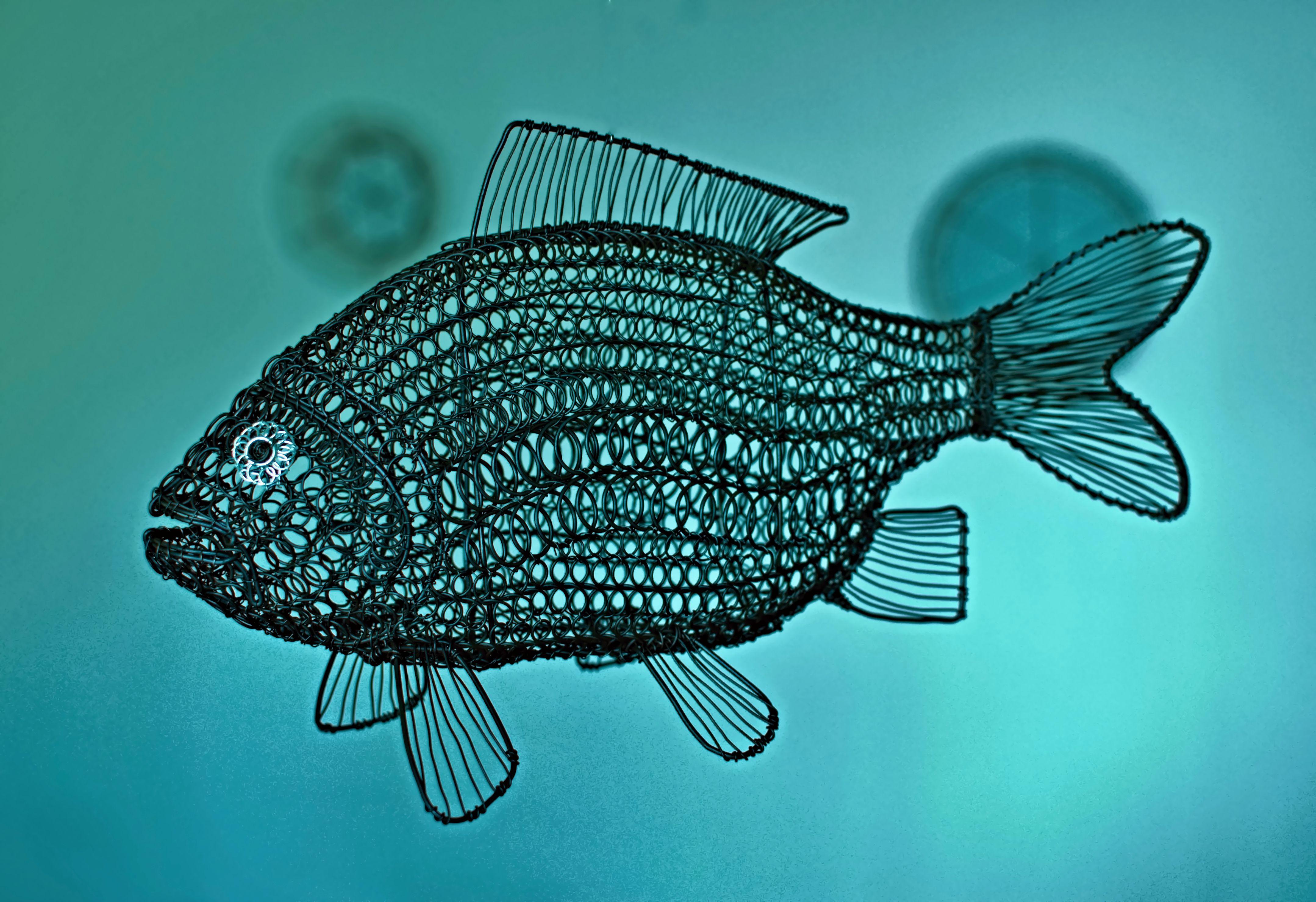 Fish,wire | wire art | Pinterest | Wire art