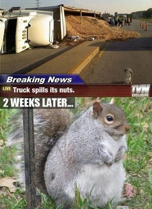 I know its a squirrel but i did find this pretty funny