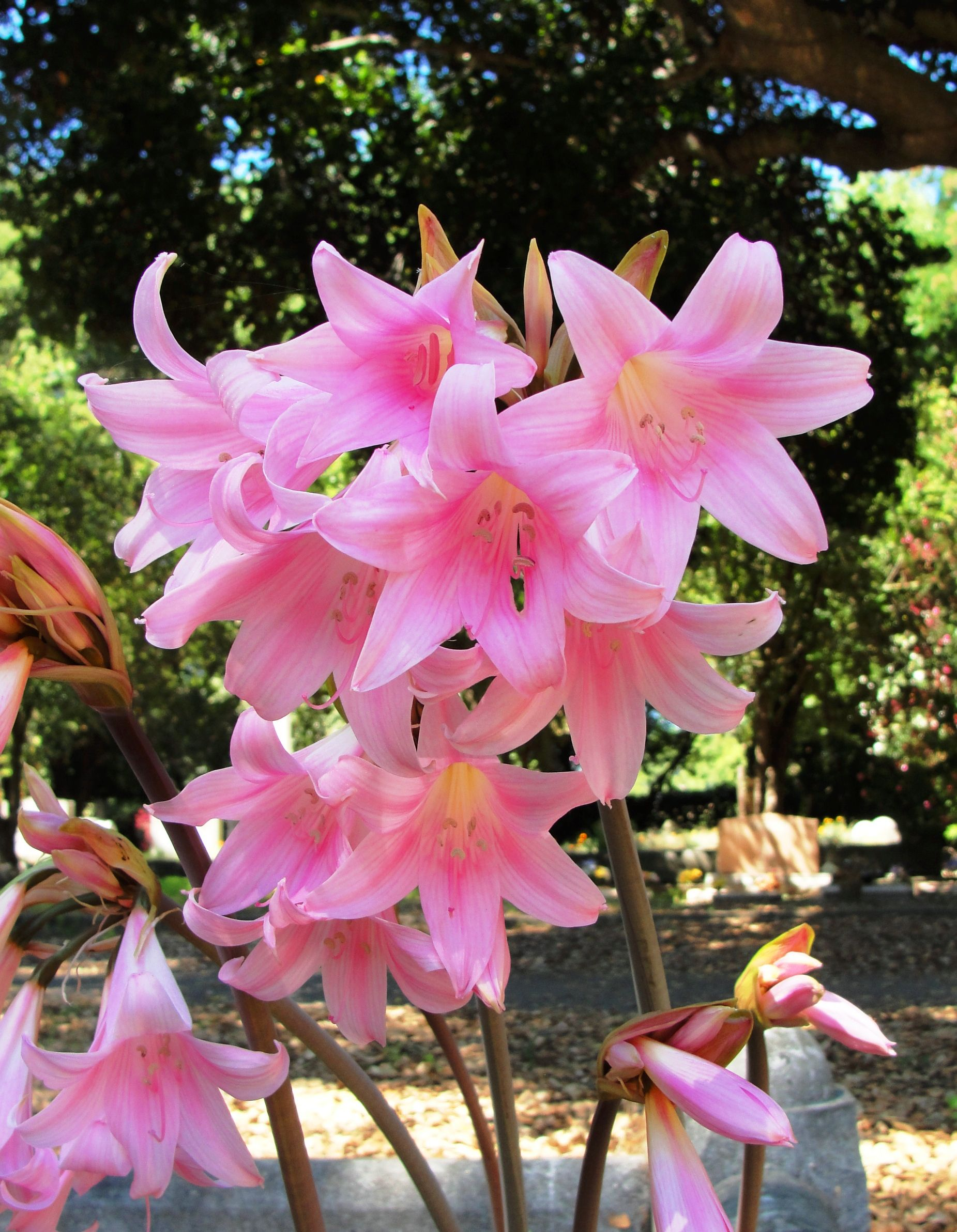 11 Different Types Of Lilies That Make You Love Garden