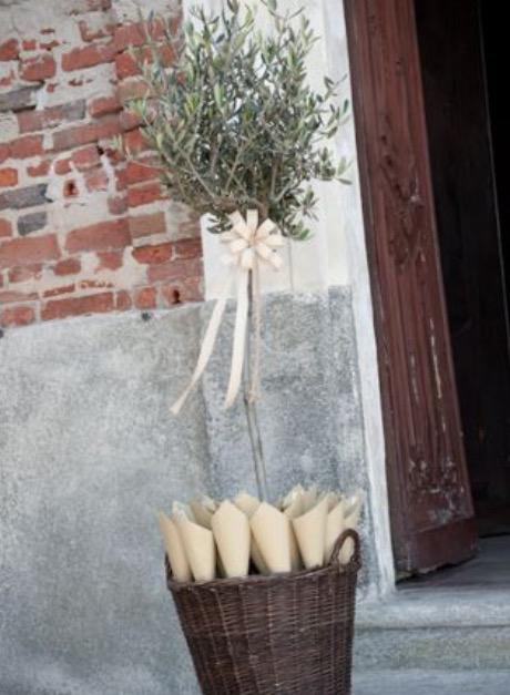 Una pianta di ulivo per i coni porta riso wedding - Porta riso matrimonio ...