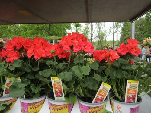 Trending In The Aisle Orange Flowers The Home Depot Community Orange Flowers Planting Flowers Flowers