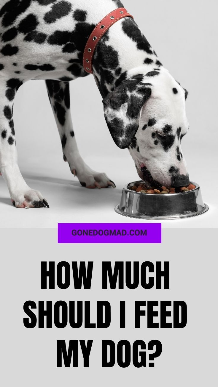 How much should i feed my dog top tips for feeding your