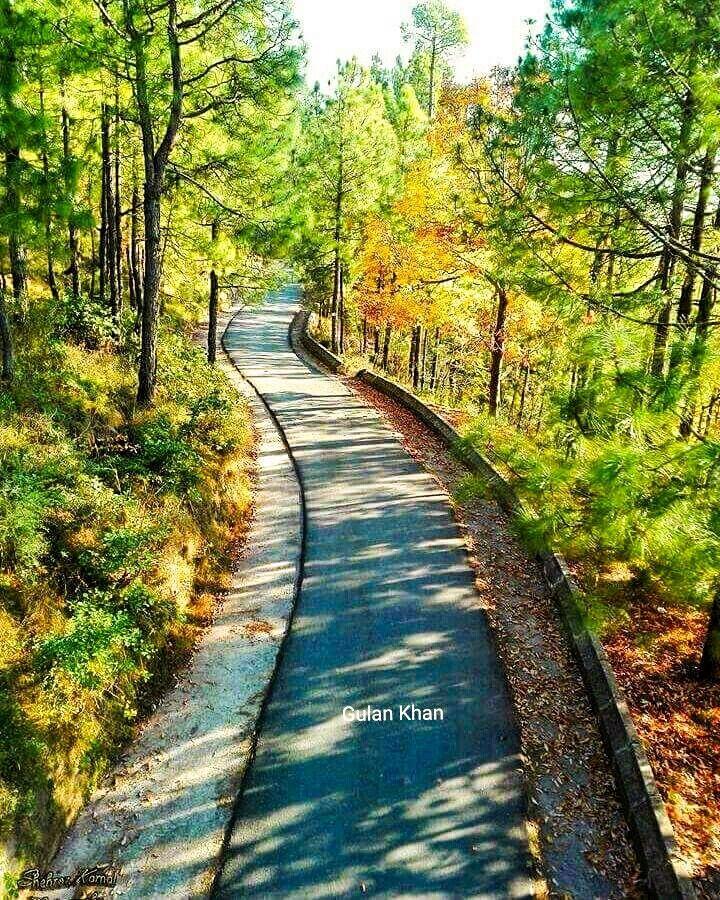 Muree, Patriata road (Pakistan) [Gulan Khan is the