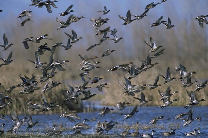 ¿Por qué es importante observar aves en un suavizado otoño?  Es oficial, arranca el otoño. Y con él, los programas de seguimiento de SEO/BirdLife de aves activan una importante etapa. En un tiempo en el que las estaciones se van suavizando, conocer cómo afectan estos cambios a las aves cobra cada vez más importancia. Al cabo, son el reflejo de lo que ocurre al ser humano. http://laoropendolasostenible.blogspot.com/2016/09/por-que-es-importante-observar-aves-en.html