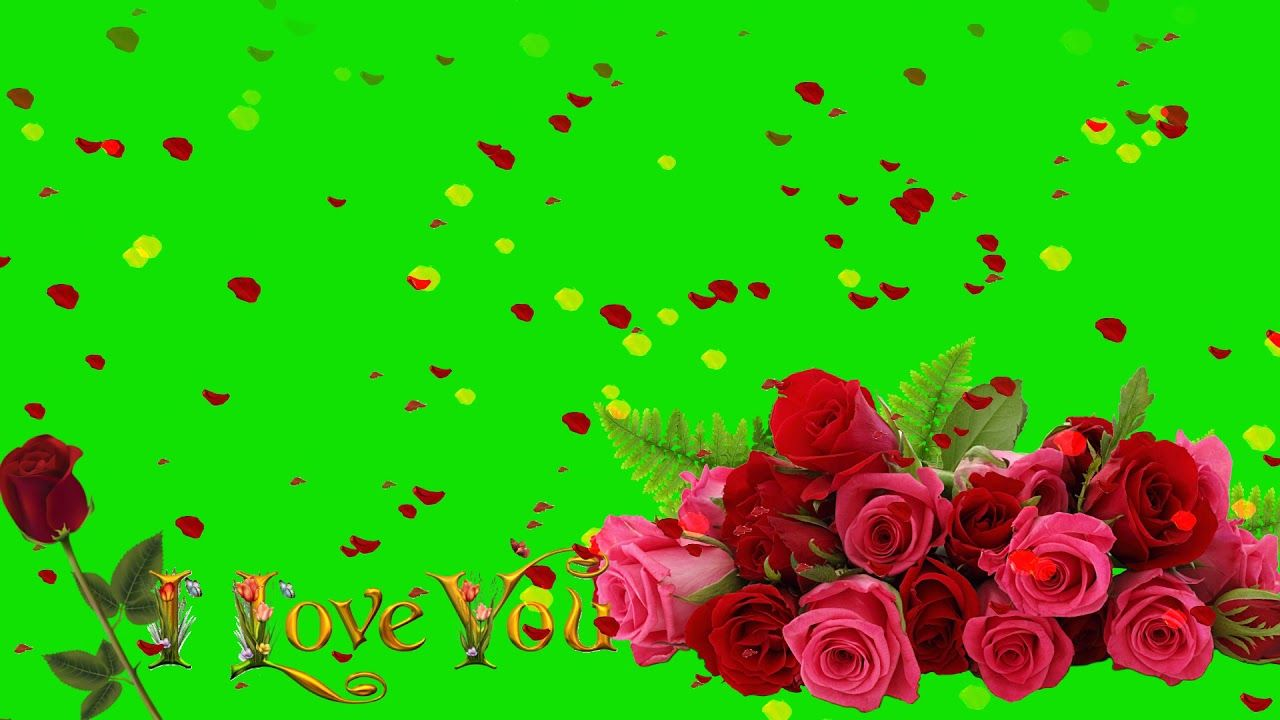Rose Petals Falling Video Free Download Star Video Effect Rose Petals Falling Flower Wallpaper Green Background Video