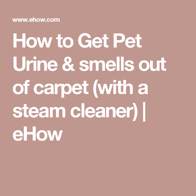 How To Get Pet Urine Amp Smells Out Of Carpet With A Steam