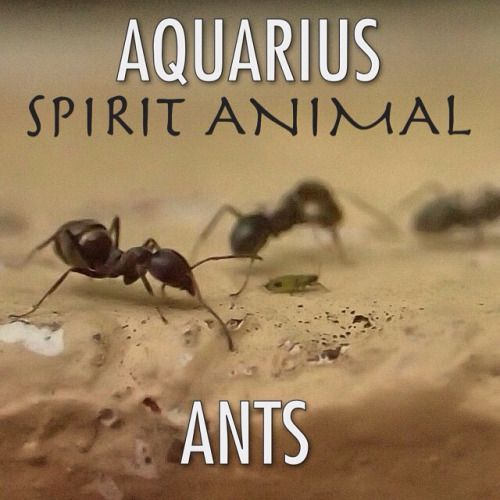 Aquarius Animal Spirit Aquarius Spirit...