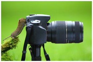 EVOLUTION: the mouse who say cheese :) #camera #photgraphy #photographie #nature