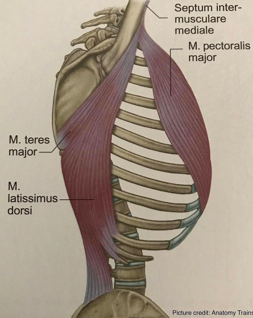 Asombroso Fundamentos De La Anatomía Humana Y Fisiología Novena ...
