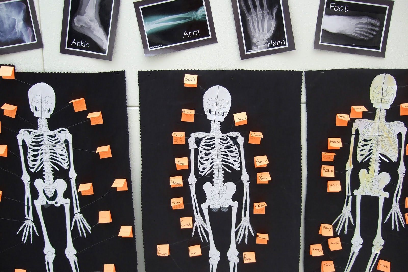 Great Skeleton Project