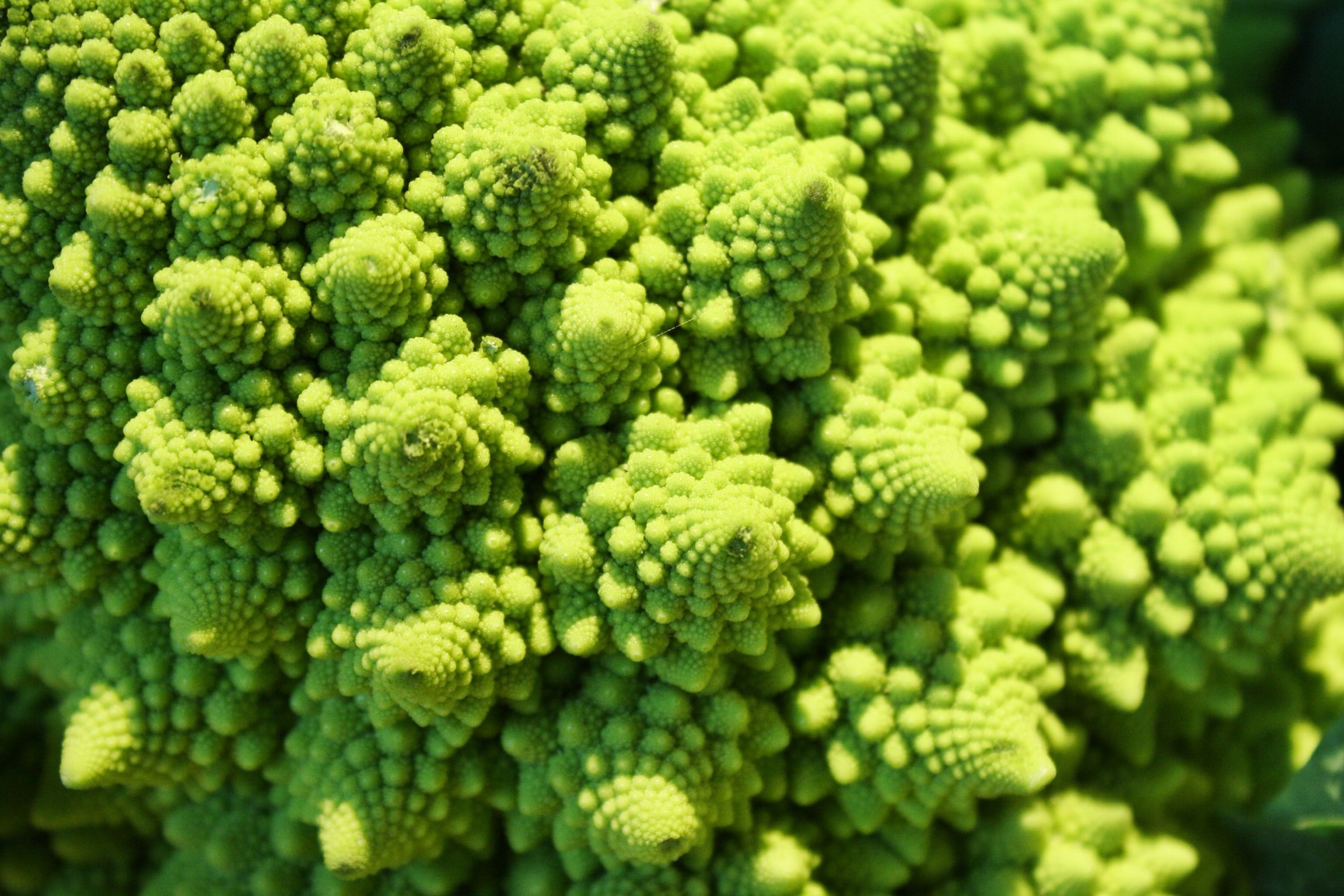 #BroccoliRomanesco at #Eataly #Roma