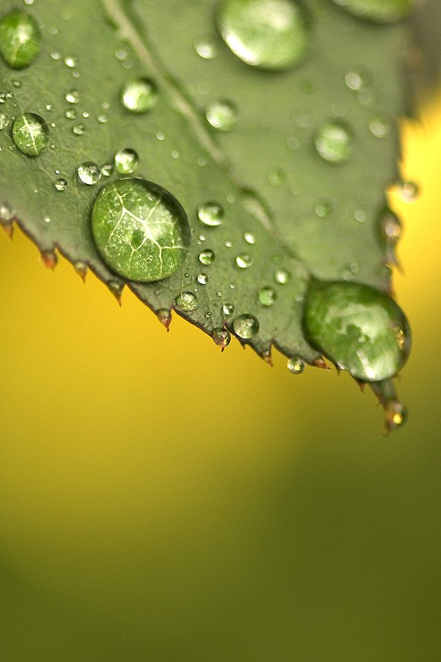 Green Dew Drop Wallpaper Marcro Waterdrop Raindrop