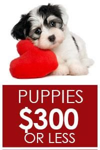 Price Under 300 Puppies for sale, Lancaster puppies