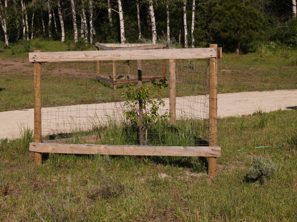 Protect Young Trees From Deer Back Gardens To Plant Yard Ideas