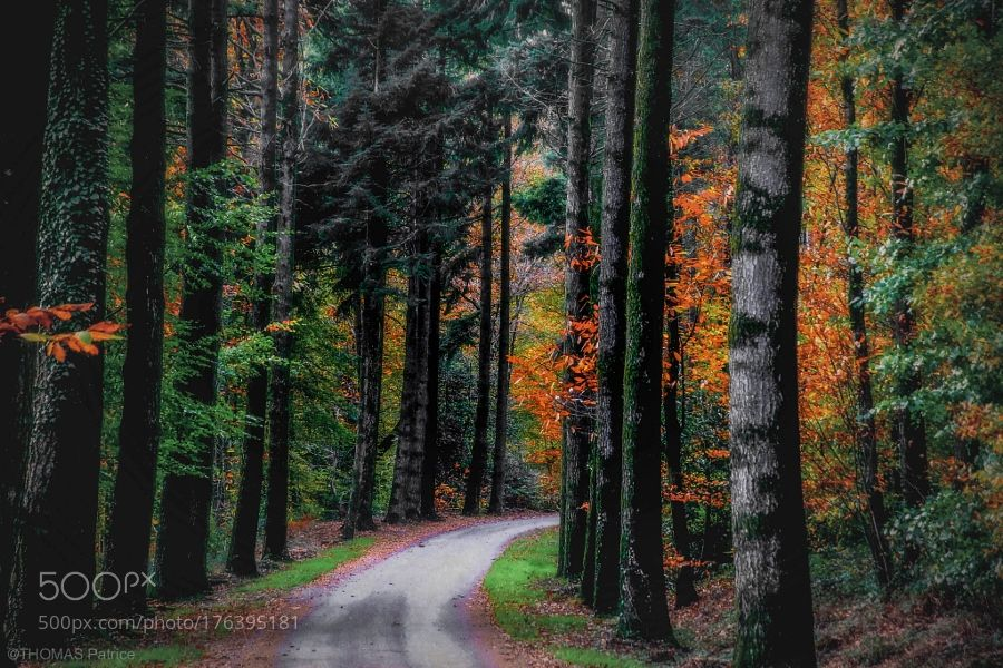 Forest road! by patthom974. Please Like http://fb.me/go4photos and Follow @go4fotos Thank You. :-)