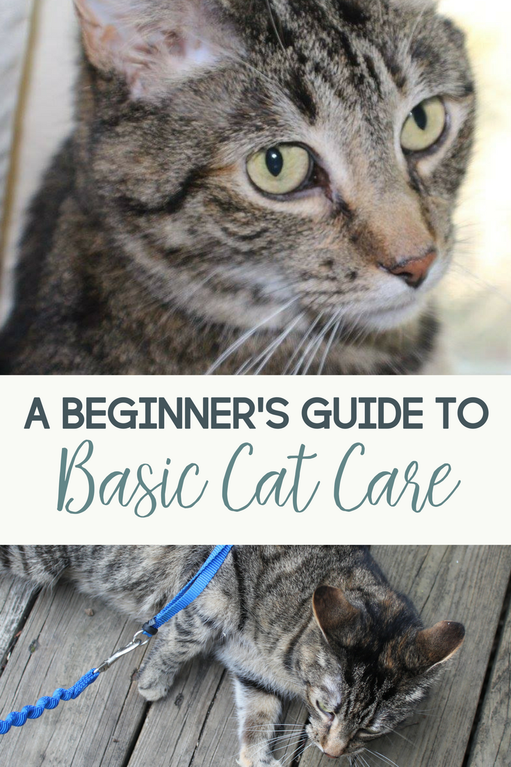 A Beginner S Guide To Basic Cat Care For The New Cat Owner Cat Care Kitten Care Cat Shelter