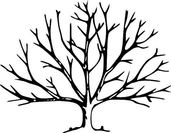 Printable Tree Without Leaves Coloring Page Family Tree Clipart