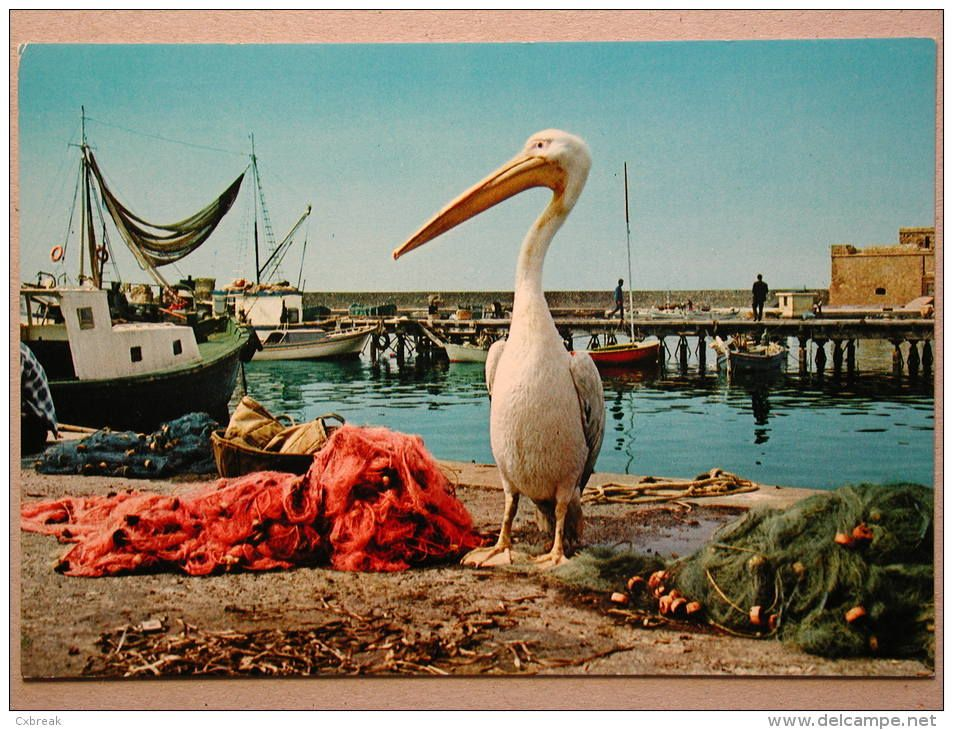 old paphos harbour pelican cyprus - Google Search