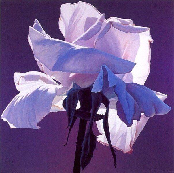 Новости | Цветочные картины, Живопись, Акварельные цветы