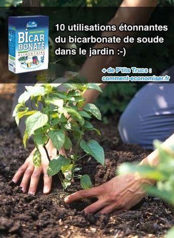10 utilisations Étonnantes du bicarbonate de soude dans le jardin