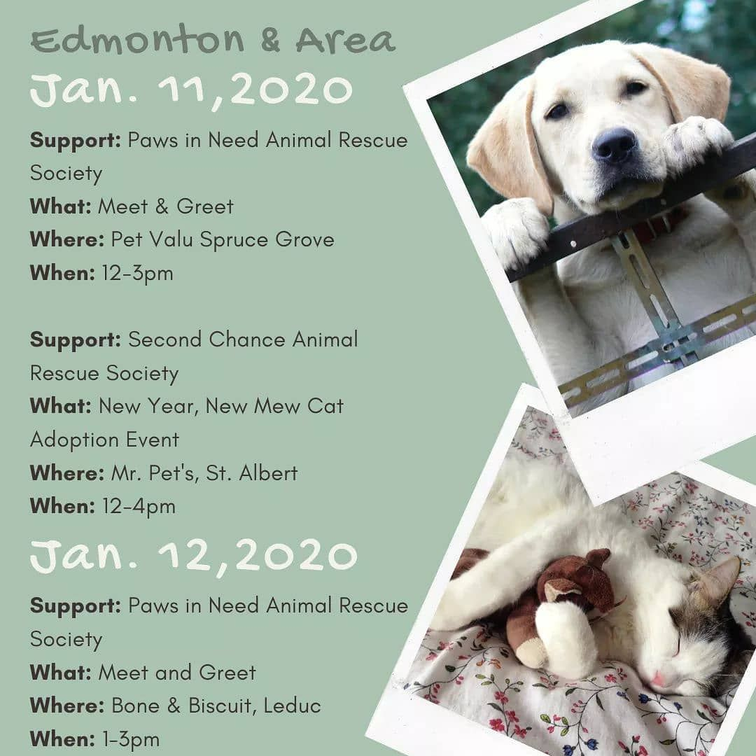 Hey Yeg Are You Looking For A New Family Member To Join You In 2020 Adoptdontshop And Check Out These In 2020 Second Chance Animal Rescue Cat Adoption Dog Language