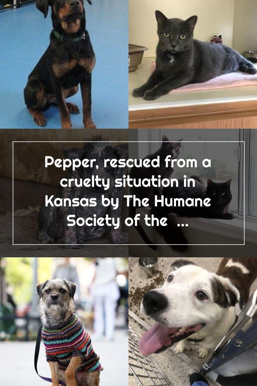 Pin On Humane Society