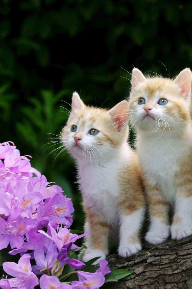 Cute Two Kittens Wallpaper IPhone