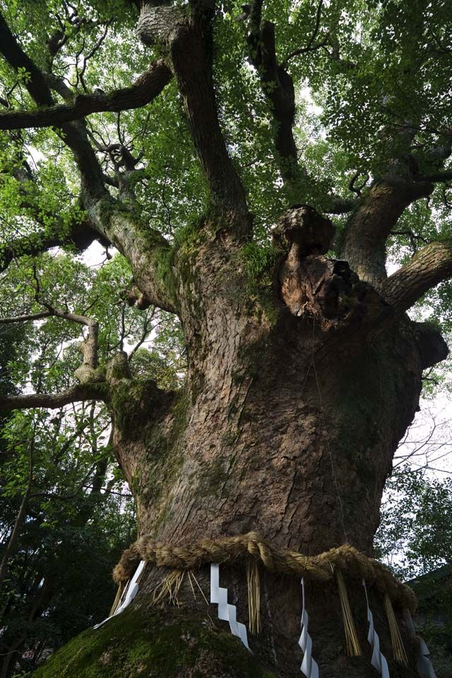 Old and majestic tree