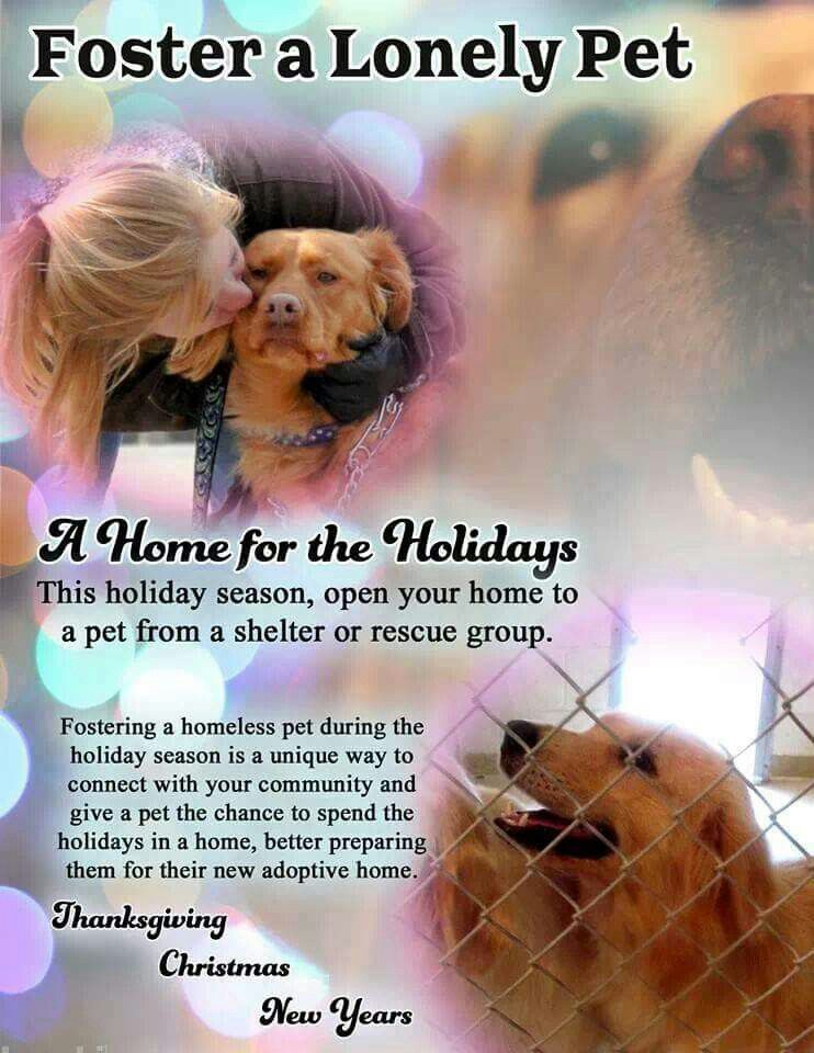 Pin by Kaye Smith on Rescue The fosters, Homeless pets, Pets