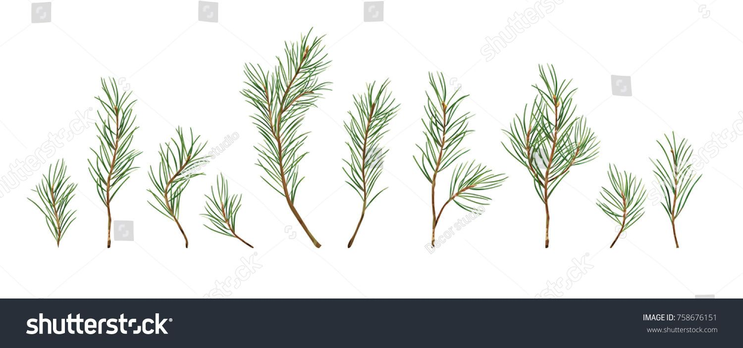 Christmas Greenery Vector.Vector Designer Elements Set Collection Of Green Natural
