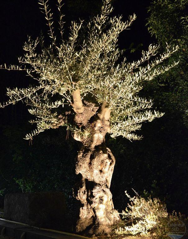 Eclairage Olivier   Jardins   Jardins, Eclairage de jardin ...