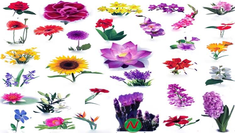 Learn Flowers Name With Relevant Necessary Vocabulary Word Meaning Image Vocabulary Flowers English Word Meaning