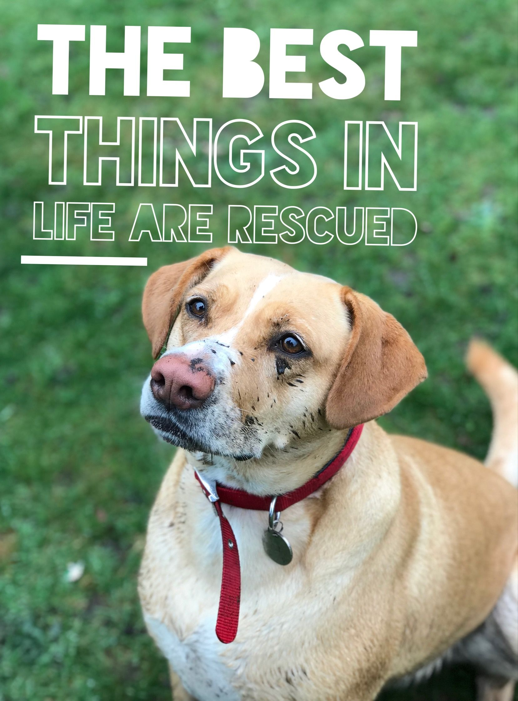 13++ Buchanan county animal shelter images