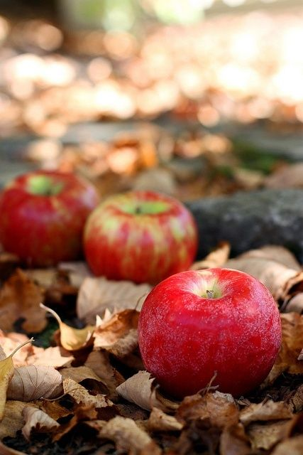 Apples --Reasons Four Loving Seasons