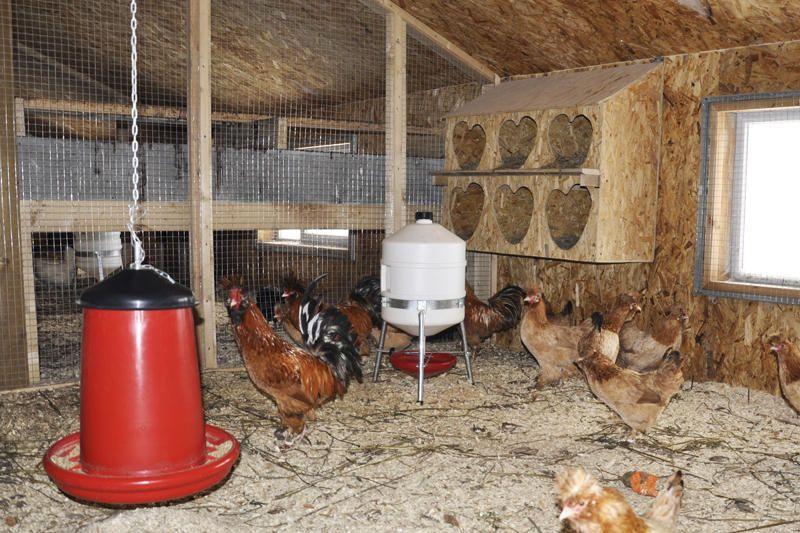 Гнездо для кур несушек своими руками: чертежи и пошаговая инструкция по изготовлению! | Курятник, Куры, Разведение кур