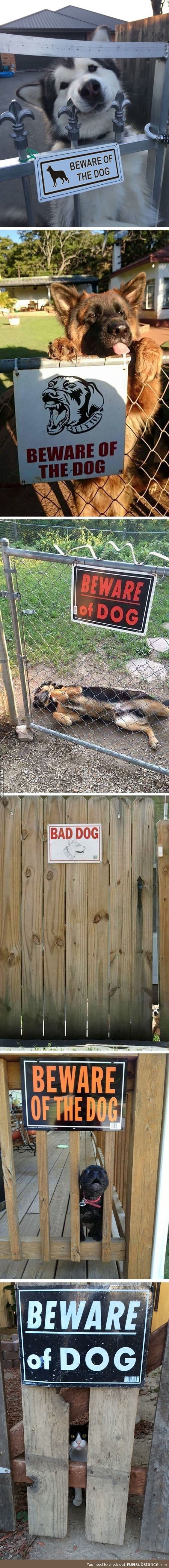 Beware of the dog,jajaja too cute to be true #dogsfunnyshaming - #Beware #Cute #dogjajaja #dogsfunnyshaming #machine #true #cuteanimalphotos