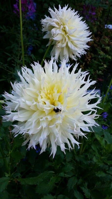Bee hiding