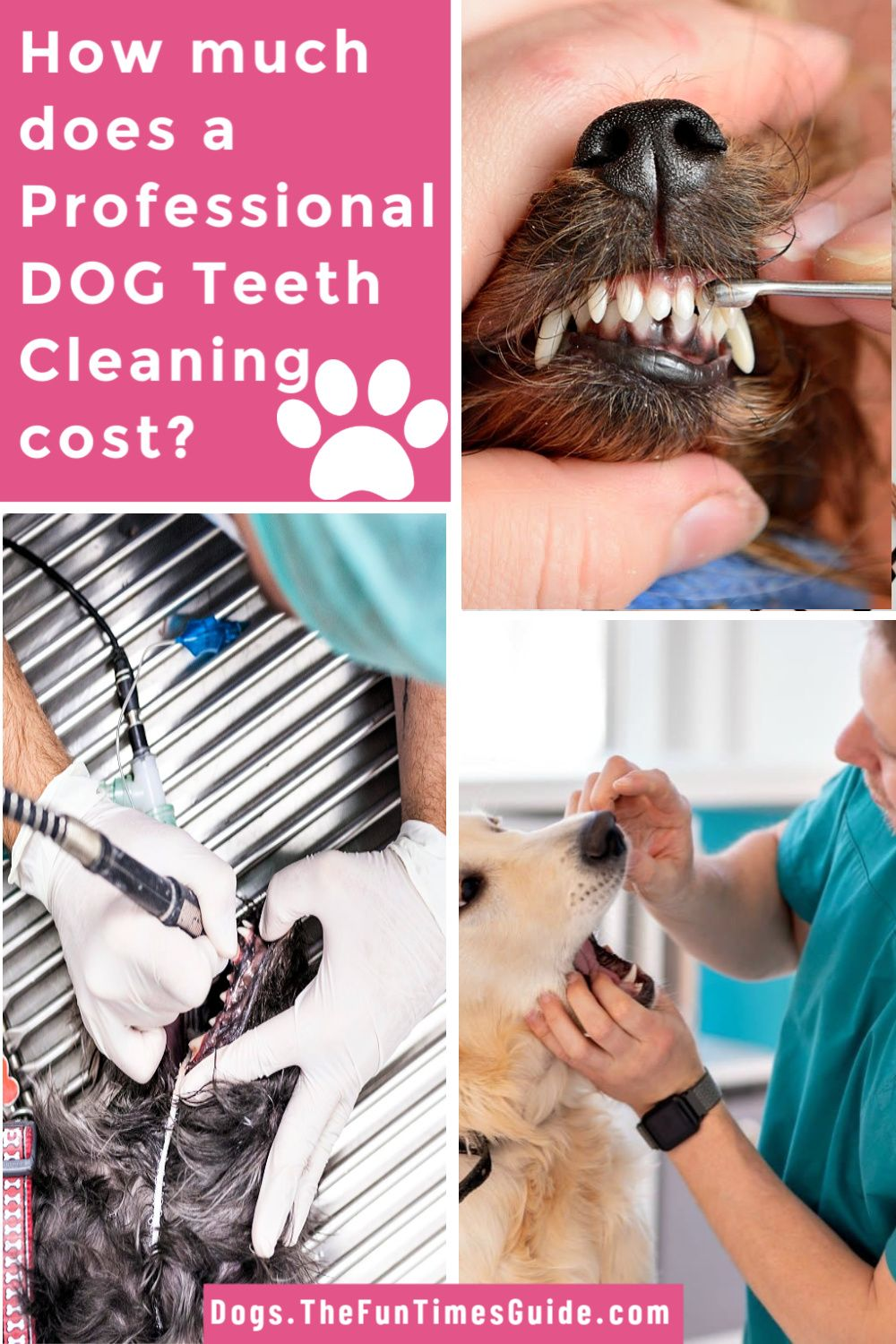 Dog Teeth Brushing Tips See Exactly How To Brush Your Dog S Teeth Yourself It S Cheaper Than A Dog Dental Cleaning After You Ve Waited Too Long Brushing Dogs Teeth Dog Teeth Care