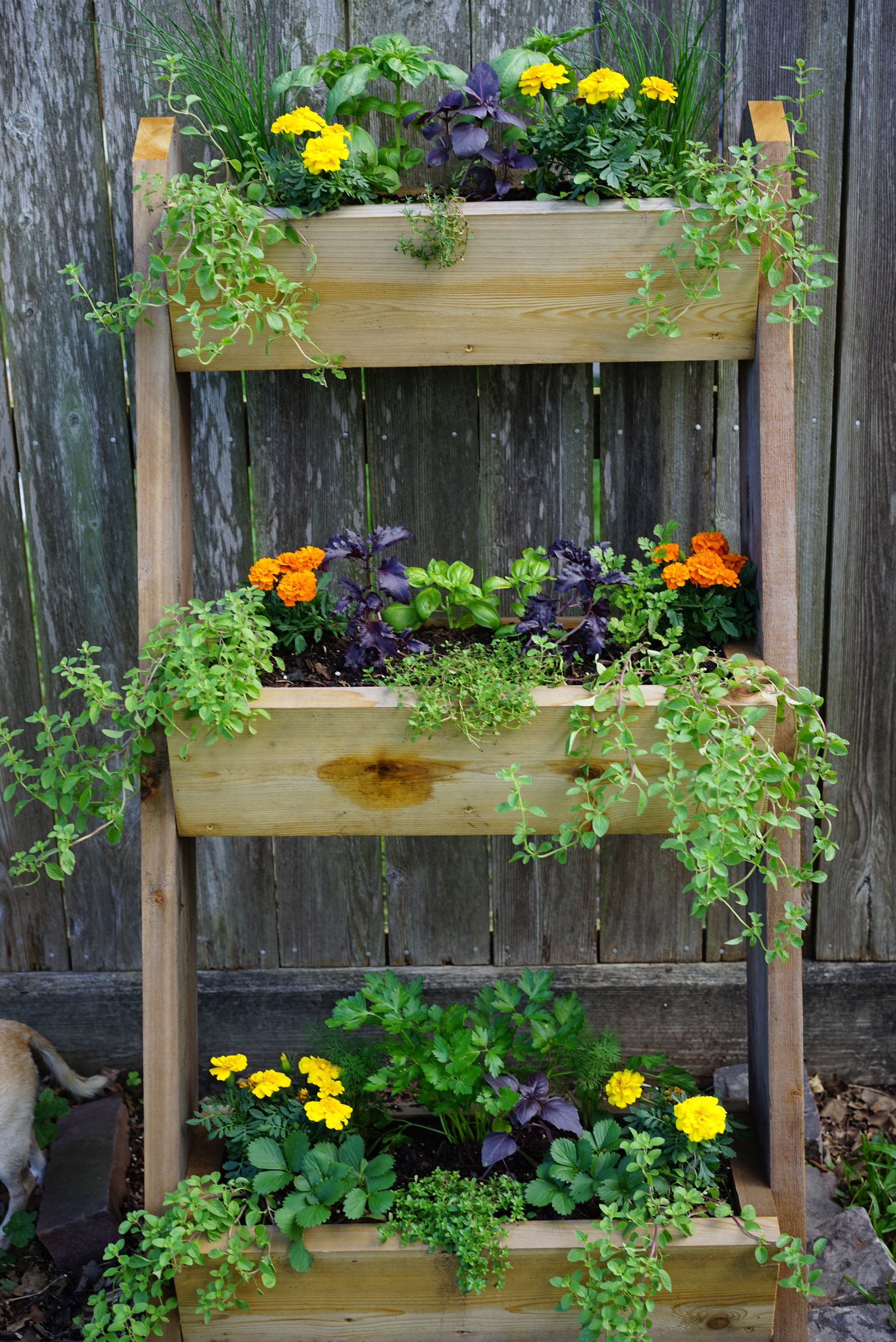3 Perfect Containers For A Salad Garden Indoor Garden