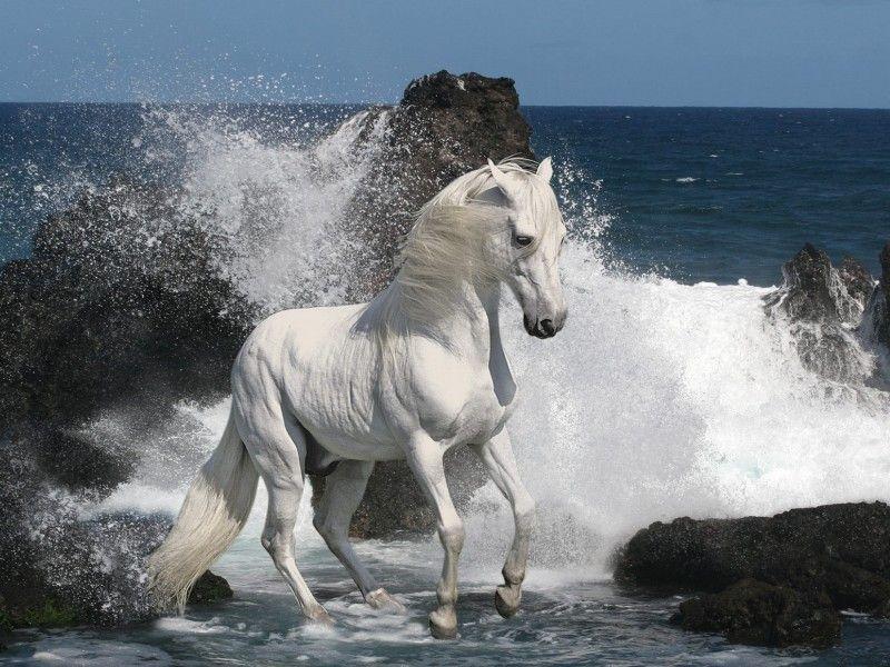 Les Fonds D Ecran Un Cheval Blanc Sur Le Rivage D Une Mer Agitee Chevaux Sauvages Beaux Chevaux Mustang Cheval